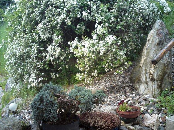 Photo of the garden Rasun in Valle d'Anterselva / Rasen im Antholzertal