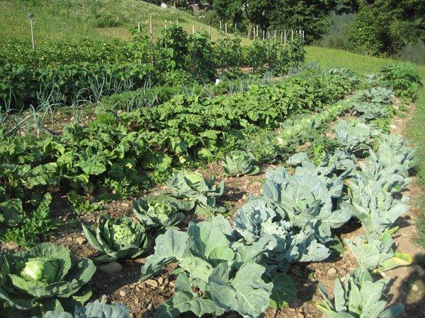 Foto del giardino Nova Levante