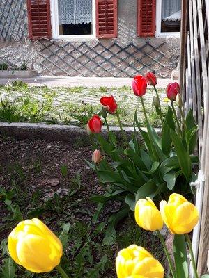 Foto del giardino Tesero