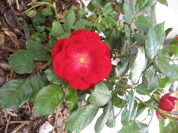 Foto del giardino Valdaora di Mezzo (Valdaora)