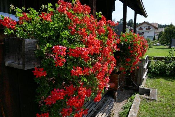 Photo of the garden Valdaora di Sotto / Niederolang (Valdaora / Olang)