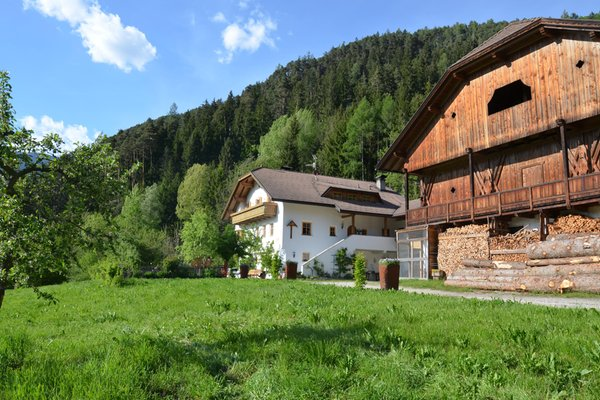 Sommer Präsentationsbild Falkenau - Zimmer + Ferienwohnungen auf dem Bauernhof 4 Blumen
