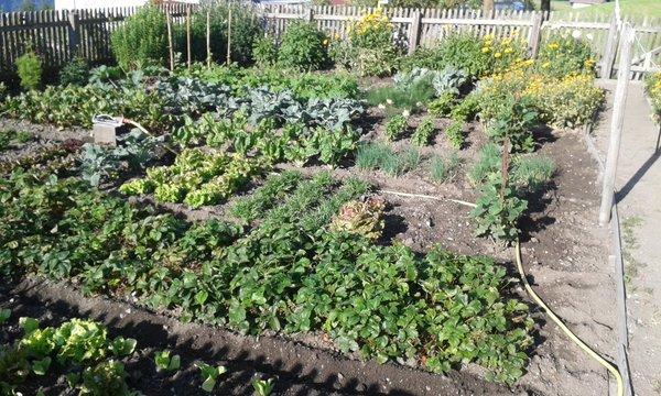 Foto vom Garten Terenten