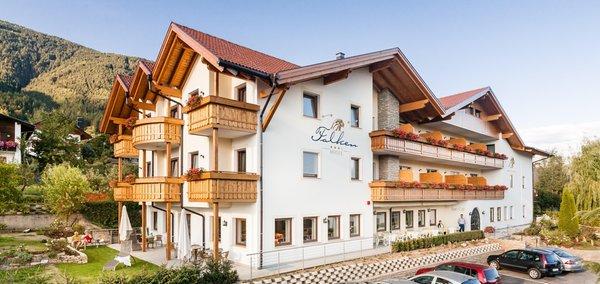 Foto estiva di presentazione Falken - Hotel 3 stelle sup.