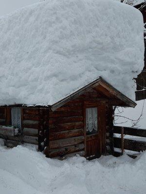Foto esterno in inverno Iris