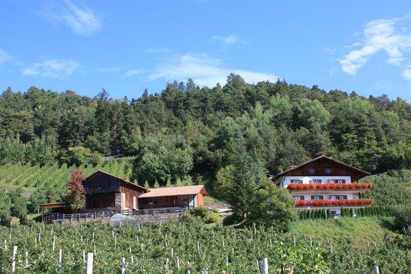 Sommer Präsentationsbild Masunerhof - Ferienwohnungen auf dem Bauernhof 4 Blumen