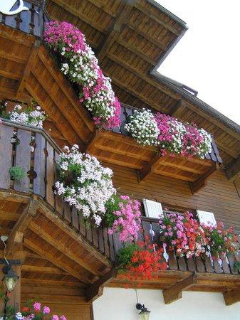 Foto esterno in estate Camoscio
