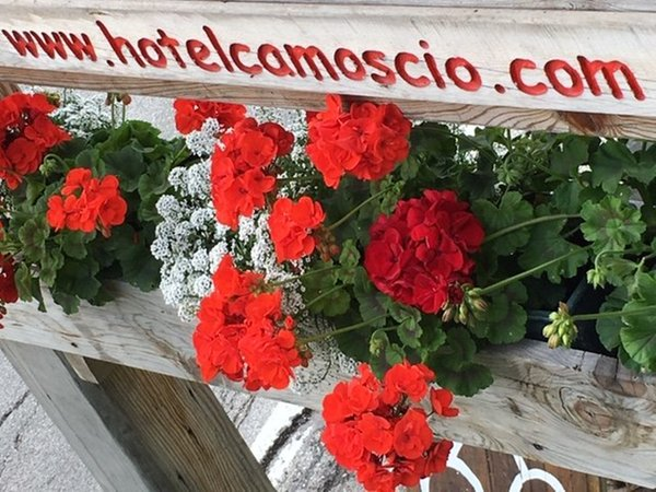 Foto einiger Details  Camoscio