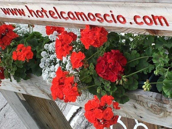 Photo of some details Camoscio