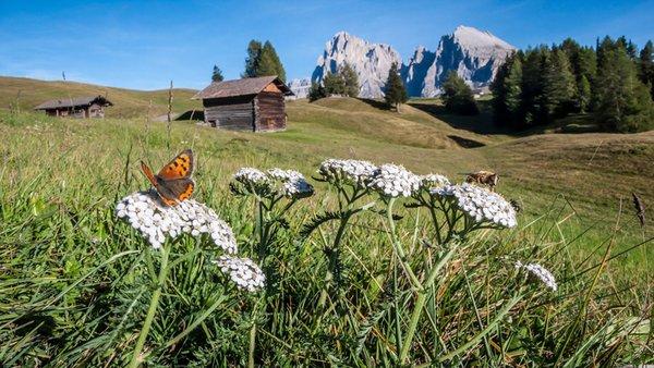 Photo gallery Val Gardena / Gröden summer