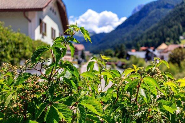 Foto esterno in estate Snaltnerhof
