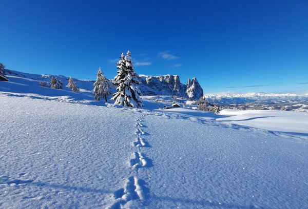 Gallery Ortisei inverno