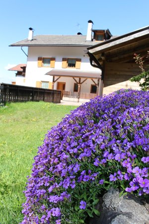 Photo of the garden Siusi allo Sciliar / Seis am Schlern