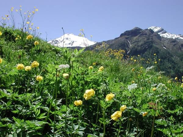 Panorama Riva di Tures