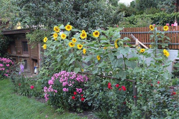 Foto vom Garten St. Jakob (Ahrntal)