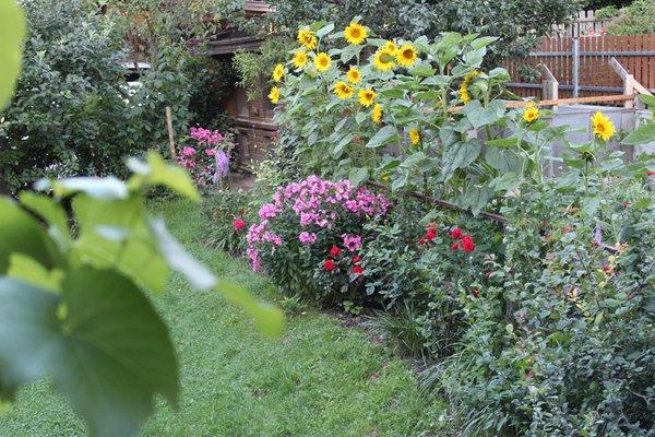 Foto del giardino San Giacomo (Valle Aurina)
