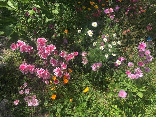 Foto del giardino Vigo di Fassa