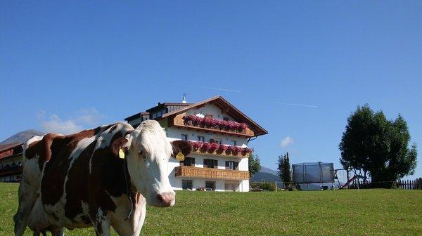 Photo exteriors in summer Rosenheim