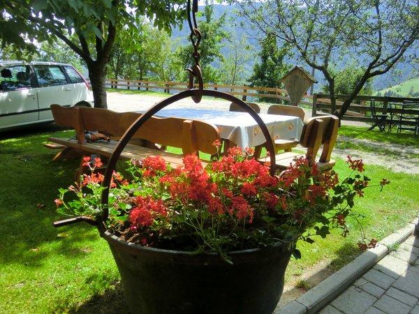 Photo of the garden Lazfons / Latzfons