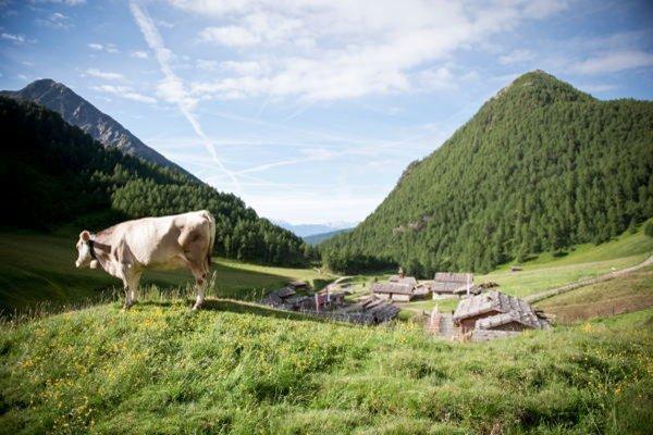 Foto estiva di presentazione Gitschberg Jochtal - Associazione turistica