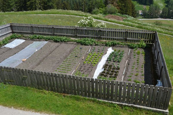 Photo of the vegetable garden