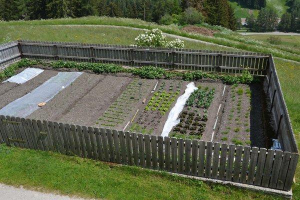 Foto vom Gemüsegarten