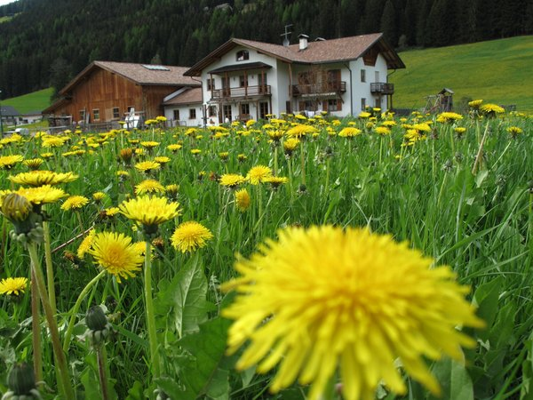 La posizione Appartamenti in agriturismo Stifterhof Villabassa