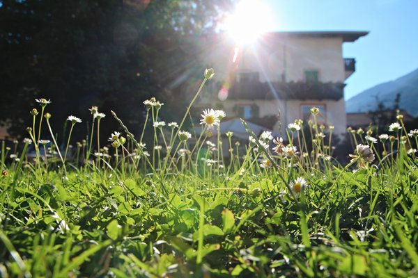 Foto vom Garten Schlanders
