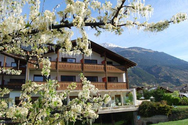 Foto esterno in estate Bamboo