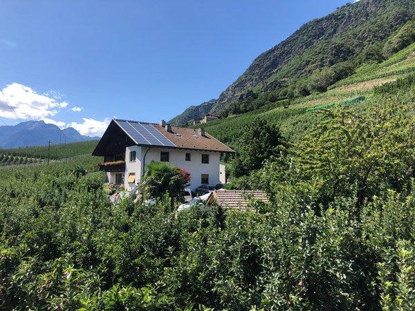 Sommer Präsentationsbild Ferienwohnungen auf dem Bauernhof Pixnerhof