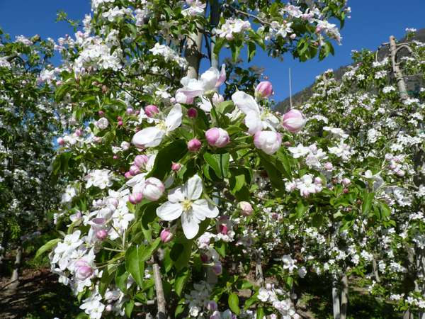Raslgut - Ferienwohnungen auf dem Bauernhof 3 Blumen Kastelbell - Tschars