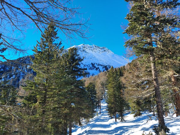 Panorama Val Martello