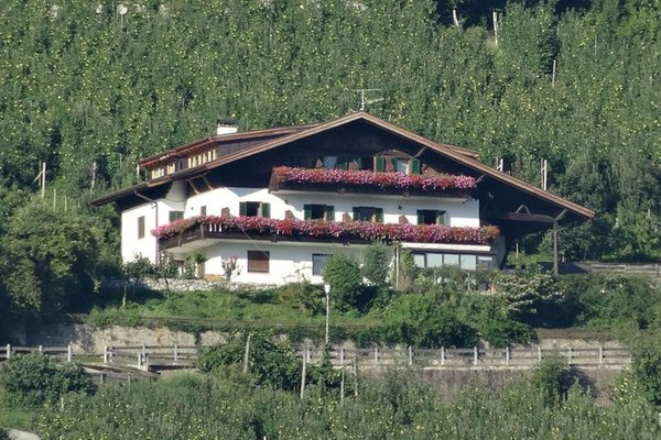 Foto estiva di presentazione Greiterhof - Pensione + Appartamenti 2 stelle