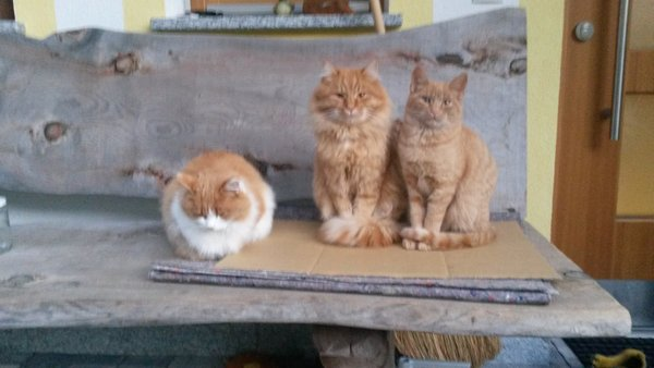 Foto degli animali