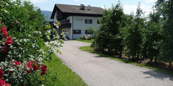 Foto esterno in estate Kreuzwegerhof