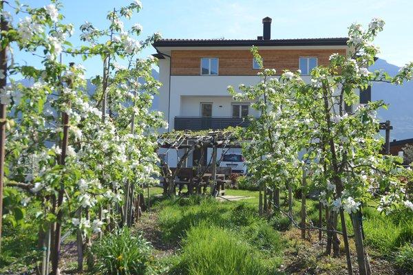 Foto del giardino Lana
