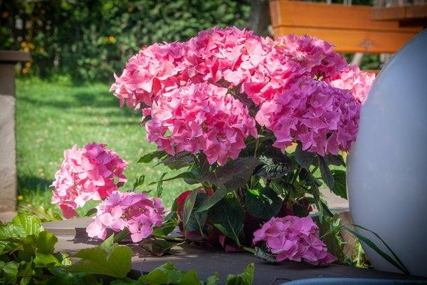 Foto del giardino Nalles