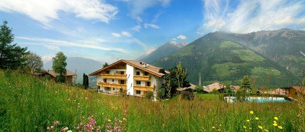 Foto Außenansicht im Sommer Alpenhof