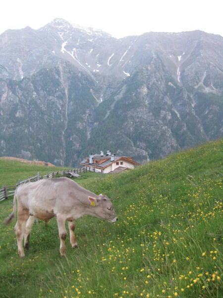 Stallwies - Ristorante  Val Martello
