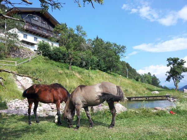 Photo of the animals