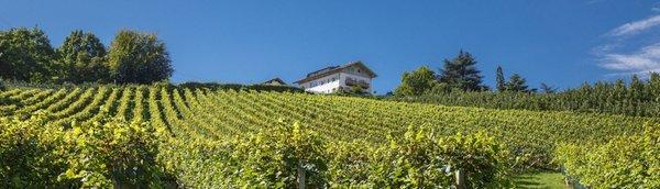 Photo gallery Bolzano / Bozen and surroundings summer