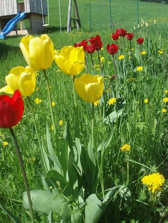Foto del giardino Appiano sulla Strada del Vino