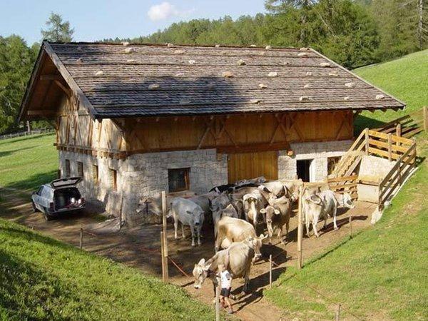 Ferienwohnungen auf dem Bauernhof Kastnerhof TradItDeEn [it=San Genesio - Val Sarentino - Meltina, de=Jenesien - Sarntal - Mölten, en=San Genesio - Val Sarentino - Meltina / Jenesien - Sarntal - Mölten]