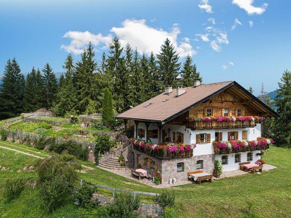Sommer Präsentationsbild Ferienwohnungen auf dem Bauernhof Thomasegg