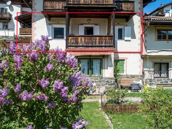 Photo exteriors in summer Villa Erna