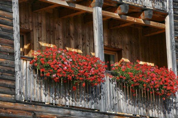 Foto esterno in estate Ciasa Flora