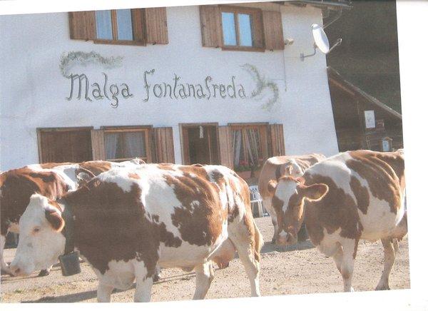 Foto estiva di presentazione Fontana Fredda - Malga