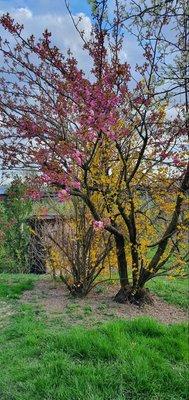 Foto del giardino Bolzano