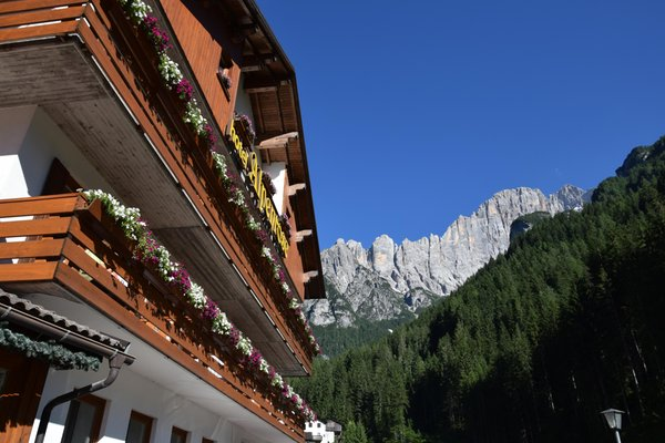 Foto Außenansicht im Sommer Alpenrose