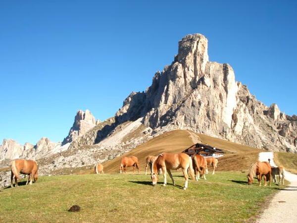 Immagine Albergo Alpino Passo Giau